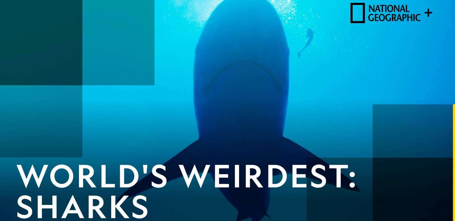 World's Weirdest: Sharks