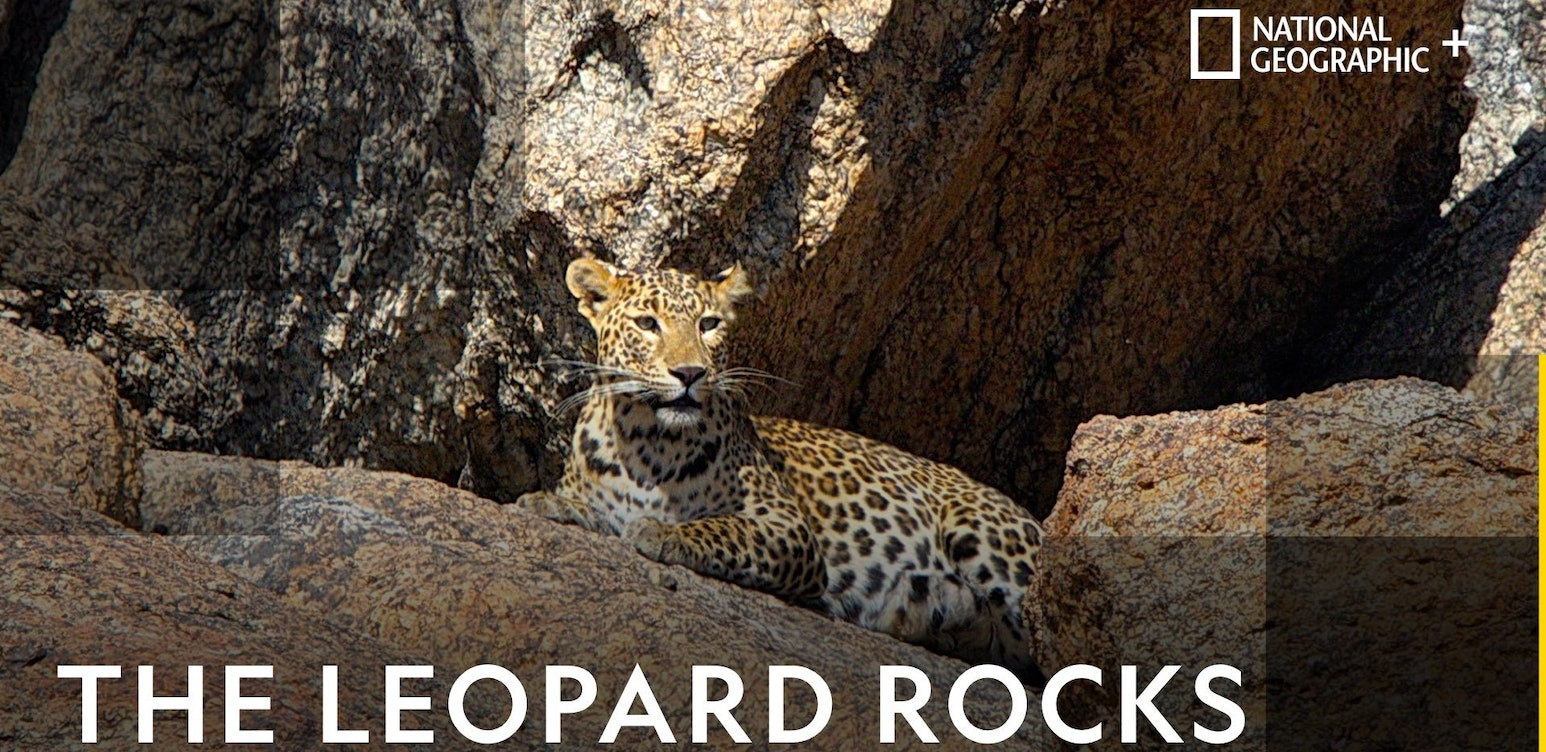 The Leopard Rocks