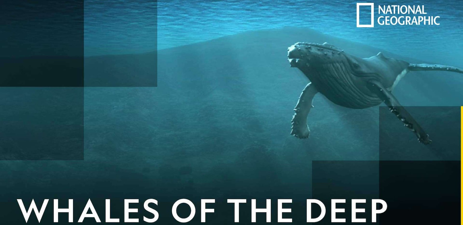 Whales of the Deep